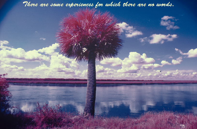 Palmetto Tree SC image c. James Henderson
